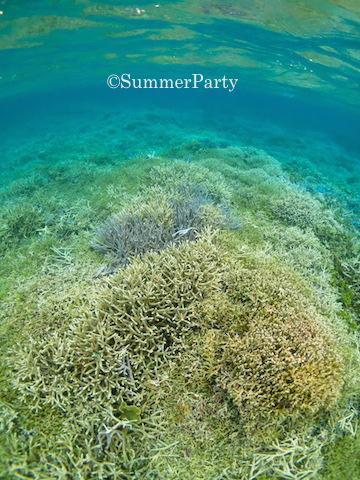 八重干瀬サンゴ礁