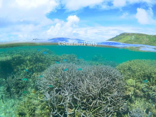 新城海岸の枝サンゴ
