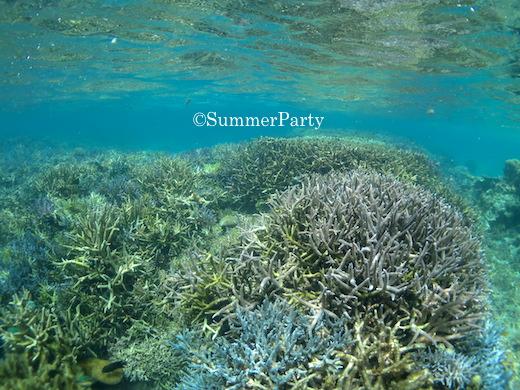 新城海岸枝サンゴ群生