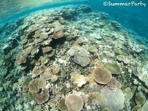 八重干瀬のサンゴ礁群