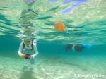 池間島 タコクラゲ