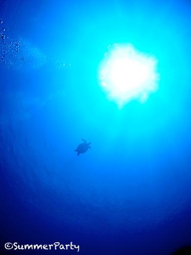 伊良部島 ウミガメ水中散歩