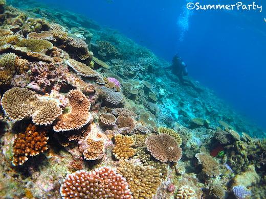 八重干瀬 サンゴ畑