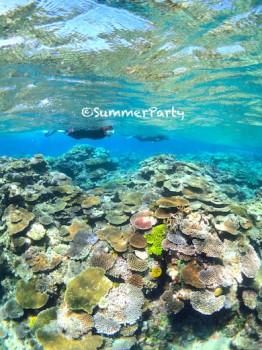 八重干瀬のサンゴ礁