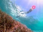 枝サンゴの森