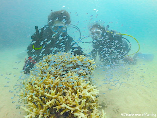 宮古島で体験ダイビング デバスズメダイの群れと