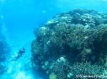 トロピケーブ サンゴもりもり