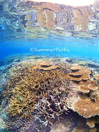 水面に反射する八重干瀬のサンゴ礁