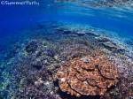 アガラガウサ どこまでも続く一面のサンゴ礁
