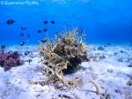 砂地と枝サンゴ