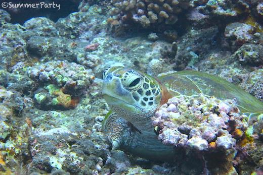 体験ダイビングでウミガメと遭遇