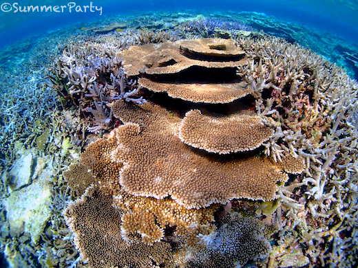 八重干瀬 サンゴ礁