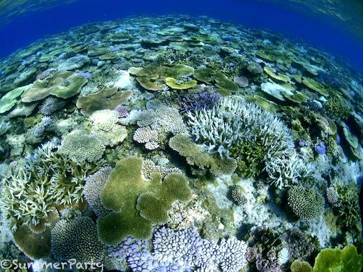 トロピケーブ サンゴ礁
