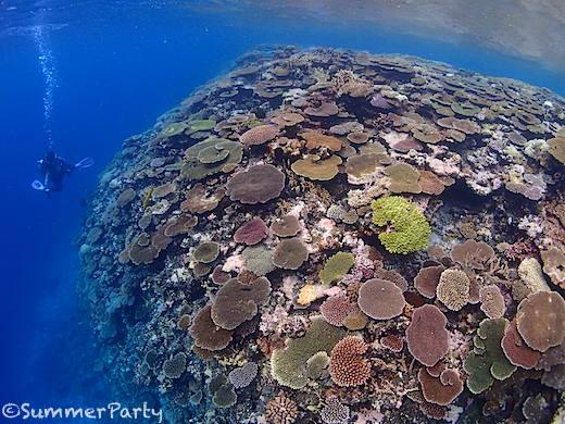 八重干瀬 キジャカのサンゴ礁