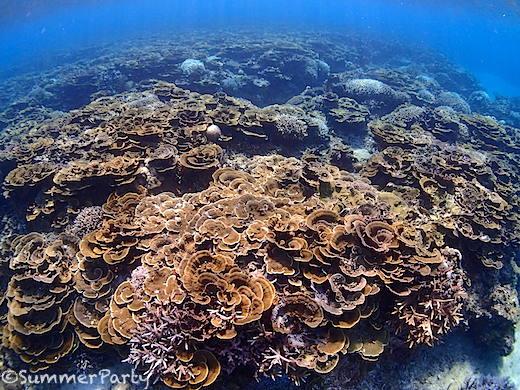 中の島リーフのサンゴ礁