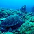 中の島でウミガメ遭遇