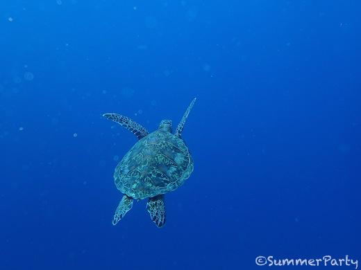 宮古島でウミガメとダイビング
