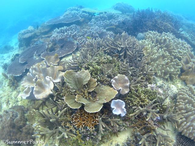 渡口の浜沖のサンゴ礁