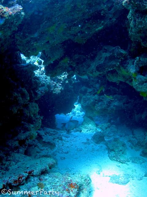 穴の中で眠るネムリブカ