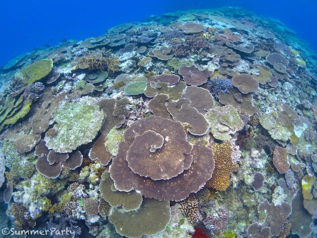 ロックビューティーのサンゴ礁