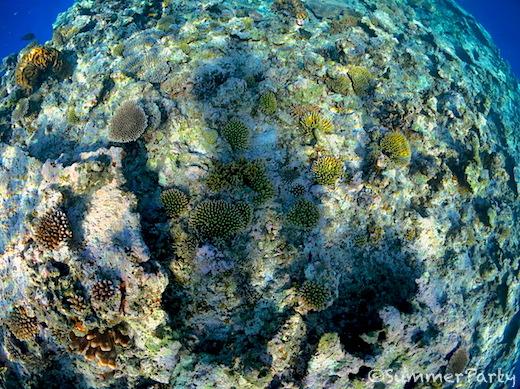 成長中のサンゴ礁