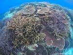 一面のサンゴ礁