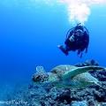 ウミガメとツーショット