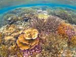 リーフ上のサンゴ礁