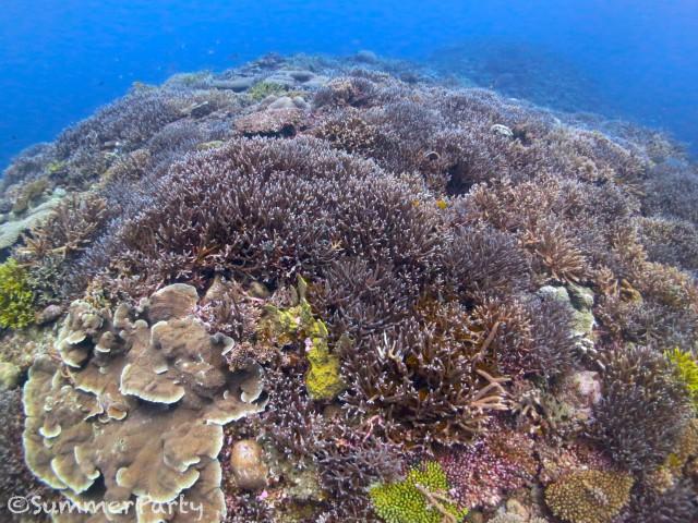 どこまでも続くサンゴ礁