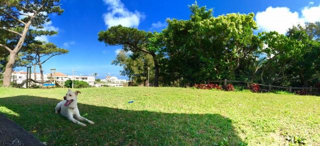 夏日の宮古島と看板犬ハナ