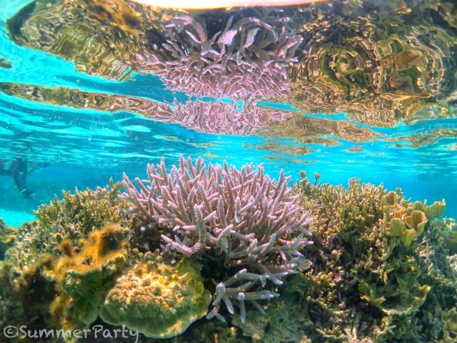 シギラビーチのサンゴ礁