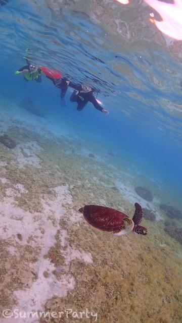 シギラビーチでウミガメと遭遇
