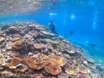 八重干瀬のサンゴ礁とせっちゃん