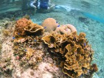 サンゴの種類も豊富なシギラビーチ