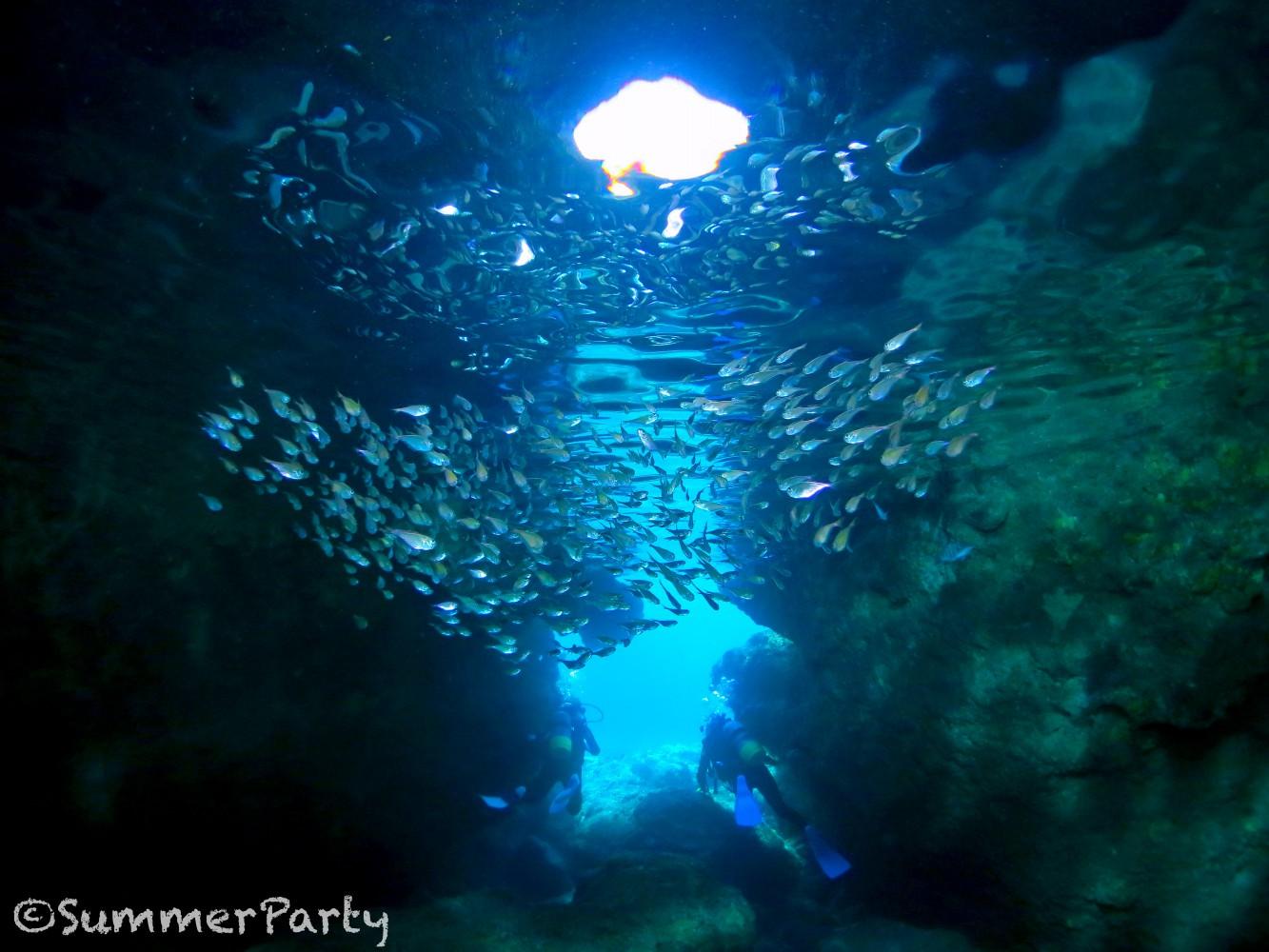 青の洞窟でハタンポの群れ