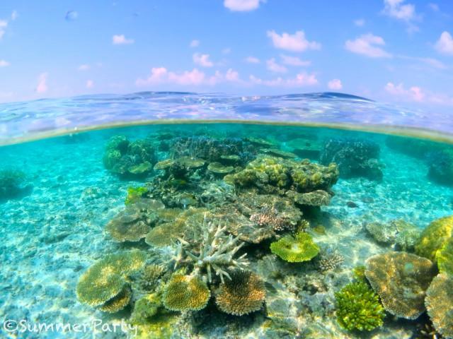 サンゴ礁半水面