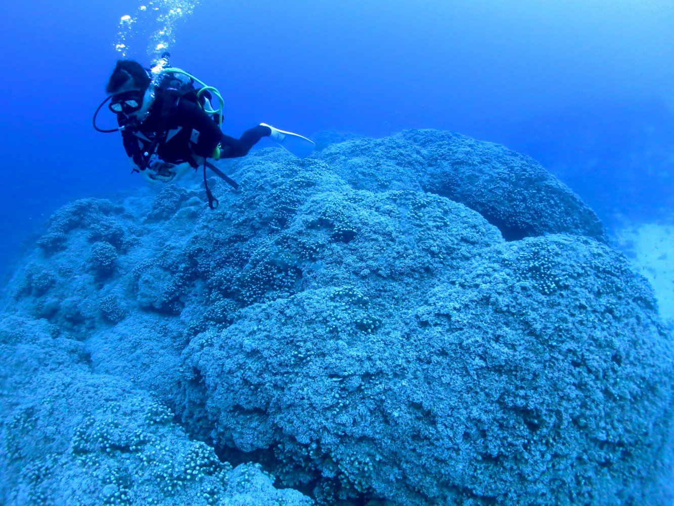 サンゴの上を遊泳