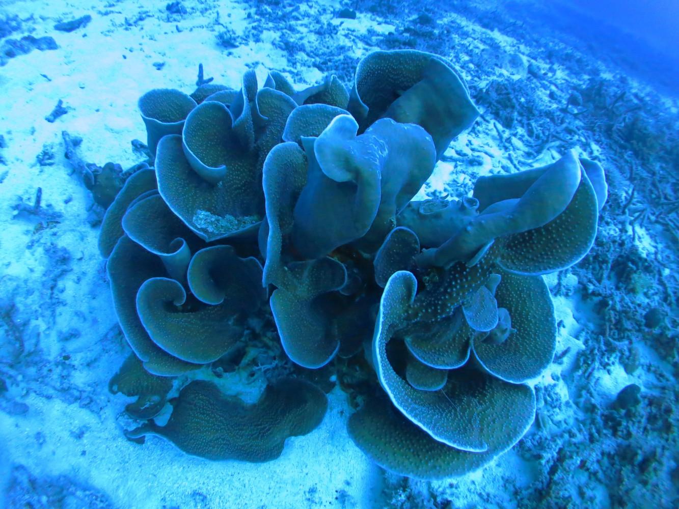サンゴのアート作品