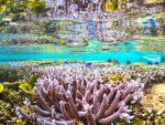 珊瑚×水面鏡