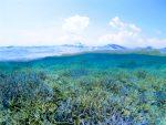 八重干瀬サンゴ礁×半水面