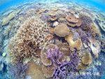 八重干瀬×サンゴ礁